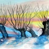 Kopfweiden in Winter, 2014